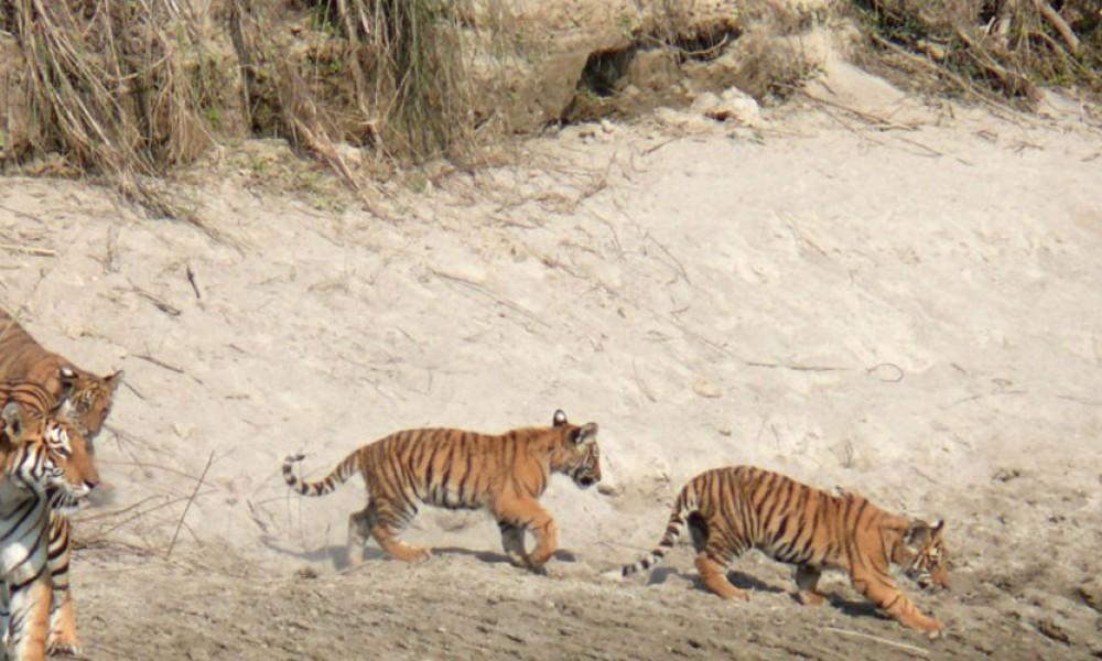 Bardia National Park Jungle Safari Tour